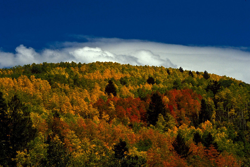 Classic autumn color explosion in the Sangre de Cristo Mountains near Santa Fe.<br /> Photo © Carl Clark