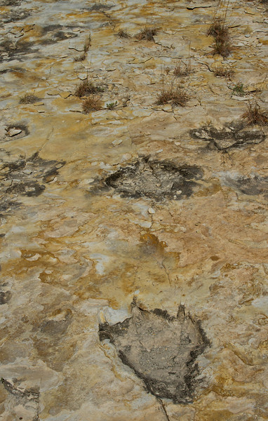 Here, there were dragons.  These are dinosaur footprints at Clayton Lake State Park.<br /> Photo © Cindy Clark