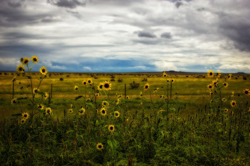 Kiowa National Grasslands  in northeast New Mexico.<br /> Photo © Cindy Clark