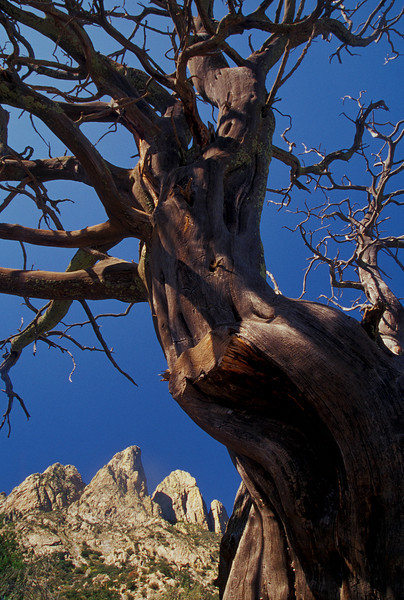 Harsh beauty in the Organ Mountains.<br /> Photo © Cindy Clark
