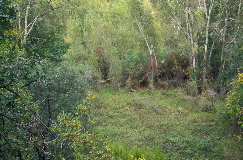 Lush foliage near Gila Cliff Dwellings.<br /> Photo © Carl Clark