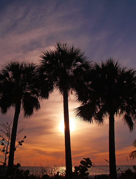 Palms in Silhouette