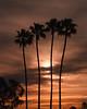 California Morning
