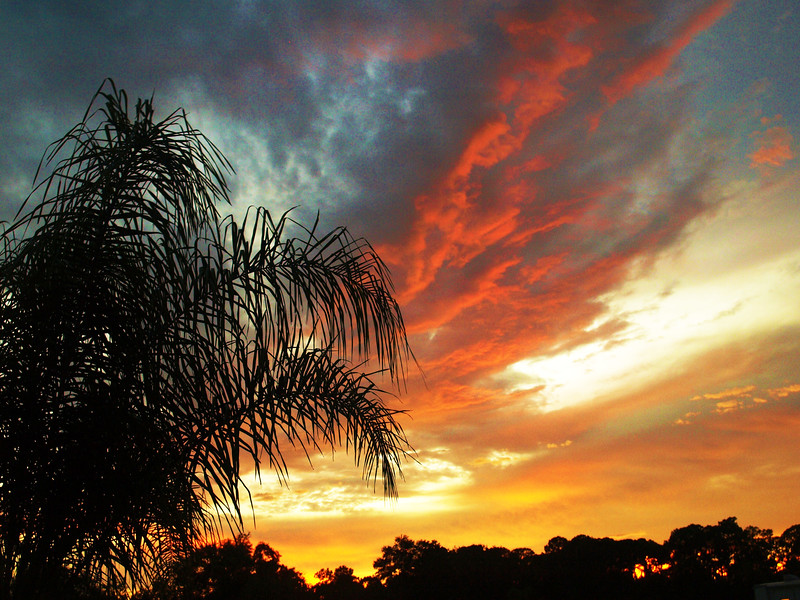 Shades of Evening<br /> Fort Myers, Florida