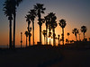 Trees and Lights<br /> Huntingyon Beach, CA