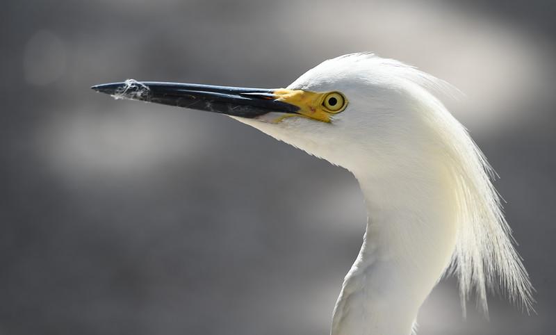 The Suncoast Seabird Sanctuary - May 5, 2015