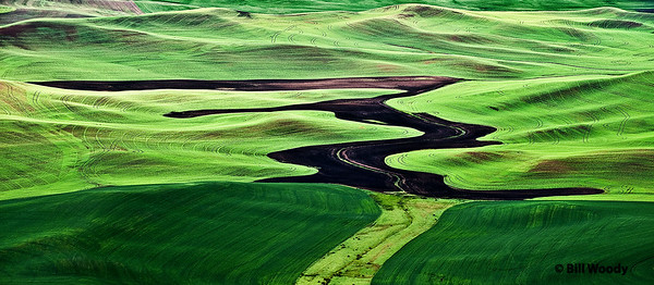Morning in the Palouse June 2009