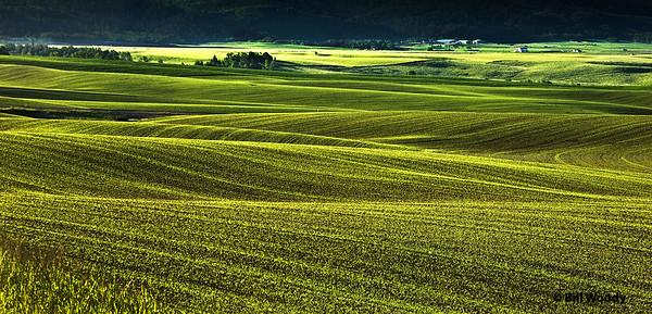 Idaho Fields Rexberg Plain