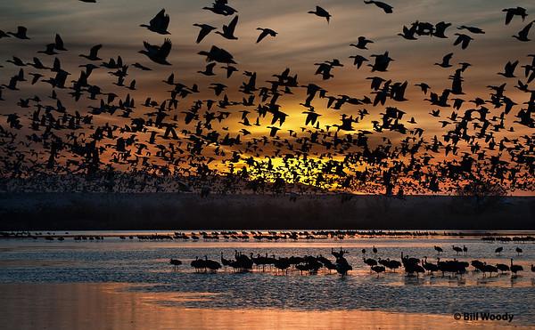 Damn Birds! Ruined my Sunrise Nov 2008 Bosque del Apache