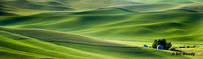 Palouse Afternoon #6