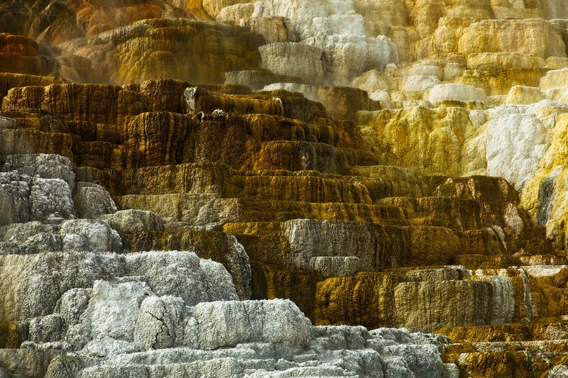 Detail from Mammoth Hot Springs.<br /> Photo © Cindy Clark