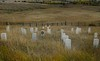 Markers show where members of the 7th Cavalry fell in the Battle of Little Bighorn, June 26, 1876.<br /> Photo © Cindy Clark