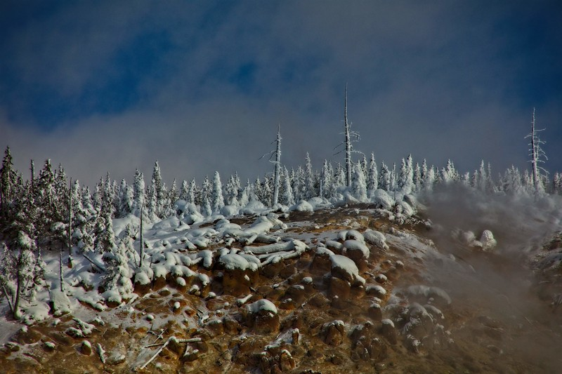 Frosted trees atop Roaring Mountain in Yellowstone.<br /> Photo © Carl Clark