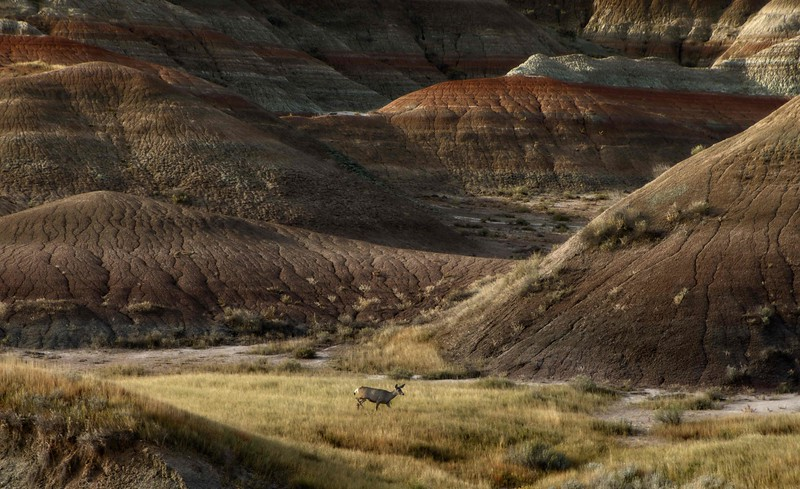 We saw lots of wildlife at Badlands National Park.<br /> Photo © Cindy Clark