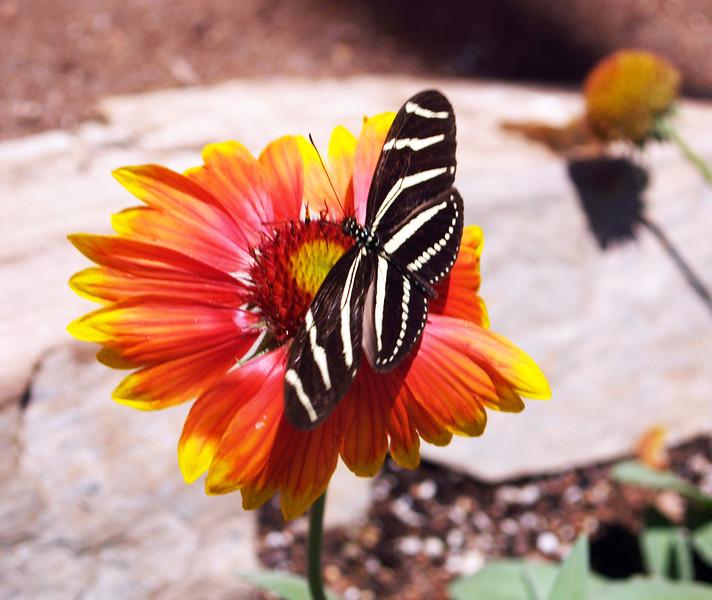 Zebra looking creature