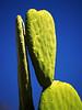 Arizona Flower