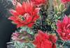 Cactus Flower Bee