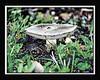 Mysterious Mushroom  16x20     $295