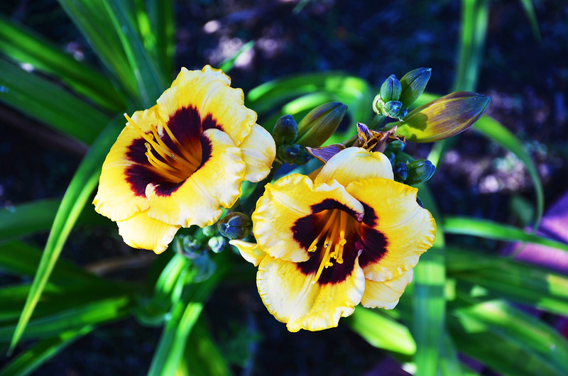 Orangeland Blooms