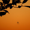 Sunset and Spider