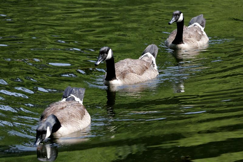 Ducks in a row?