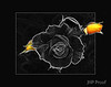 Black Rose +