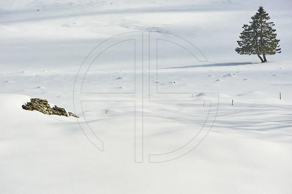 Cold White Desert