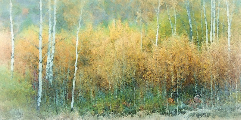 AUTUMN PASTELS<br /> <br /> Dreamy and ethereal, a light frost and early morning mist transforms Autumn's vivid colours into soft pastels.