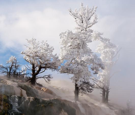 White Trees on Ridge 3