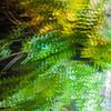 Frizzled Foliage