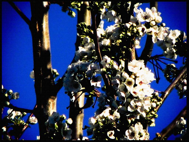 Spring blooms.