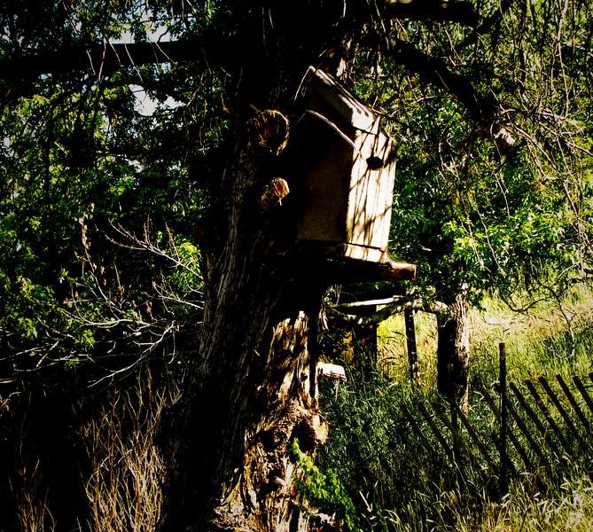 Birdhouse.