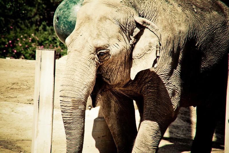 Laughing elephant.