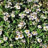 Fall Flowers near Aspen Colorado