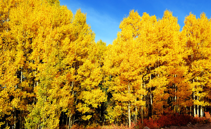 Colorado in the Fall 2