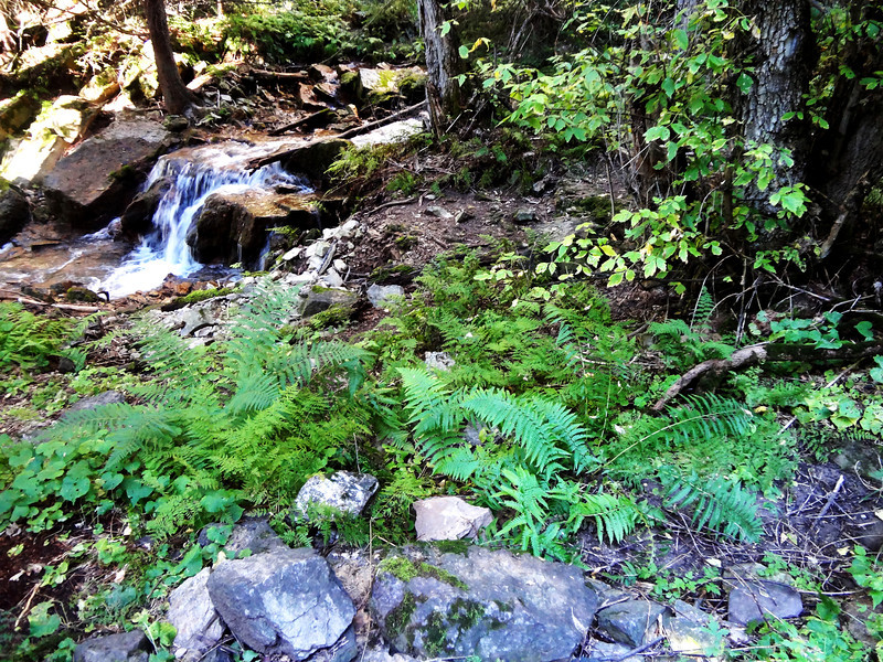 Rocks and Leaves Along the Trail to Hanging Lake near Glenwood Springs Colorado