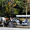Carriage and Horses in Breckenridge Colorado