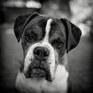 Ike, looking reasonably intelligent