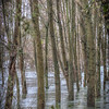 Flooded forest at Conca Azzurra - Parco del Ticino, Vigevano