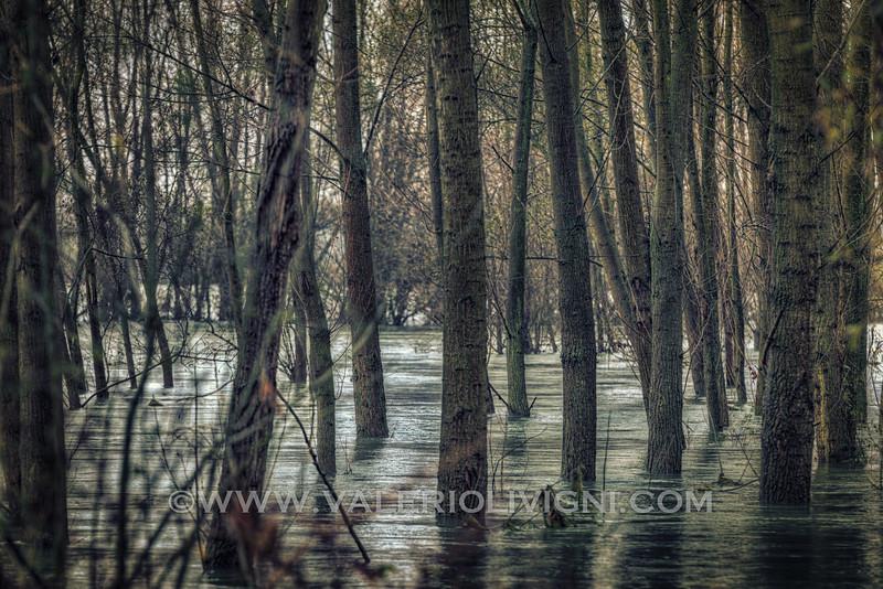 Flooded forest at Conca Azzurra - Parco del Ticino, Vigevano