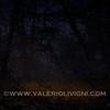 Night clearing at Ronchi estate - Parco del Ticino, Vigevano