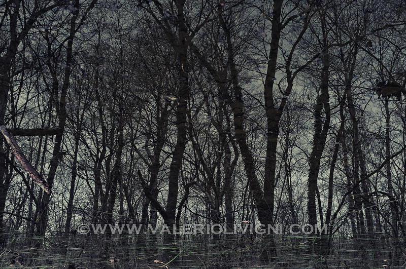 Reflections at Ronchi estate - Parco del Ticino, Vigevano