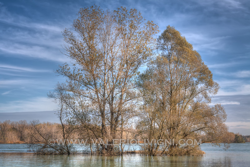 Trees plunged into the Ticino river at Ayala oxbow lake - Parco del Ticino, Vigevano