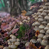 Mushrooms, fairies and gnomes at Ronchi estate - Parco del Ticino, Vigevano