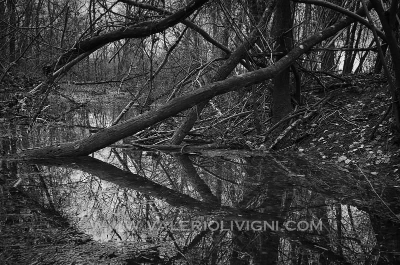 Rain pond at Ronchi estate - Parco del Ticino, Vigevano