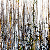 River canes into the Ticino river close to Ayala oxbow lake - Parco del Ticino, Vigevano