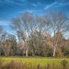 Trees on the road to Ronchi estate - Parco del Ticino, Vigevano