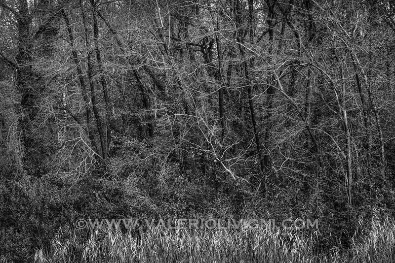 Forest close to the Butterflies Trail - Parco del Ticino, Molino del Conte