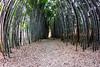 The Bamboo Forest - Oconaluftee Island - Cherokee, North Catolona