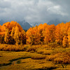 One of my favorite fall photos..Yellowstone with a storm coming in. The golds against the greys.